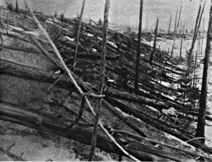 Image taken by the the Leonid Kulik Expedition of trees felled by the Tunguska explosion: