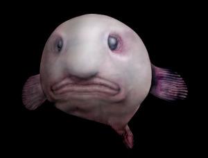 Blobfish via Kevin Young
