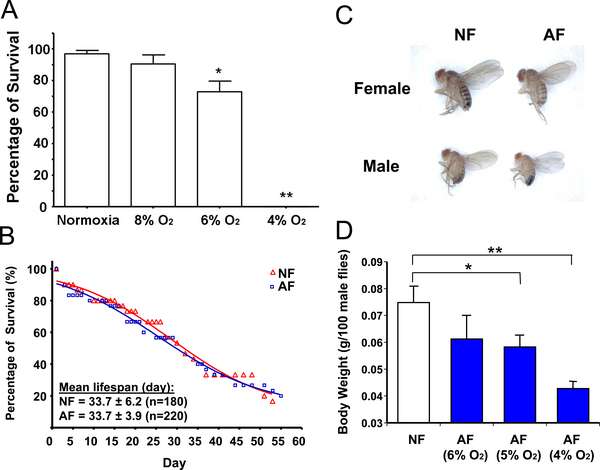 Phenotypic changes in hypoxia-selected Drosophila melanogaster