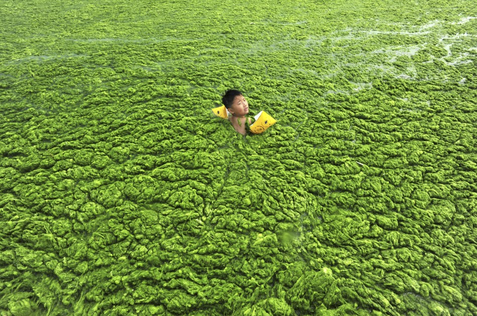 Extreme algae off the coast of China via  China Daily/Reuters