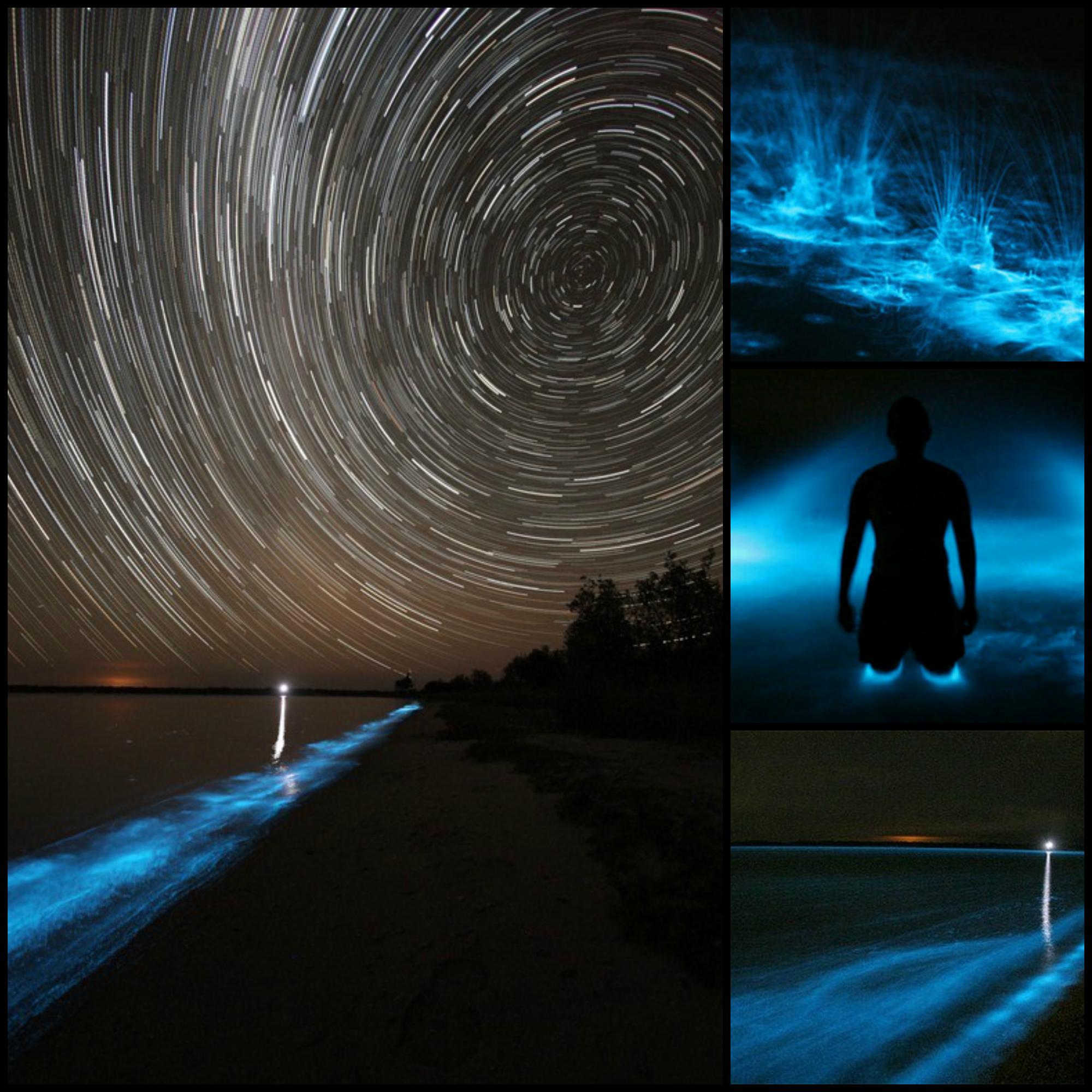 Bioluminescence Gippsland Lakes