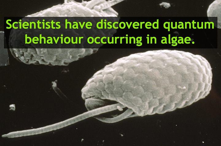 Image Credit: CSIRO Text added by Sciencealert