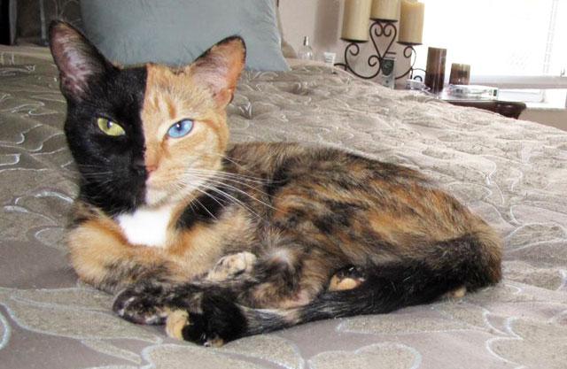 Cat bilateral
