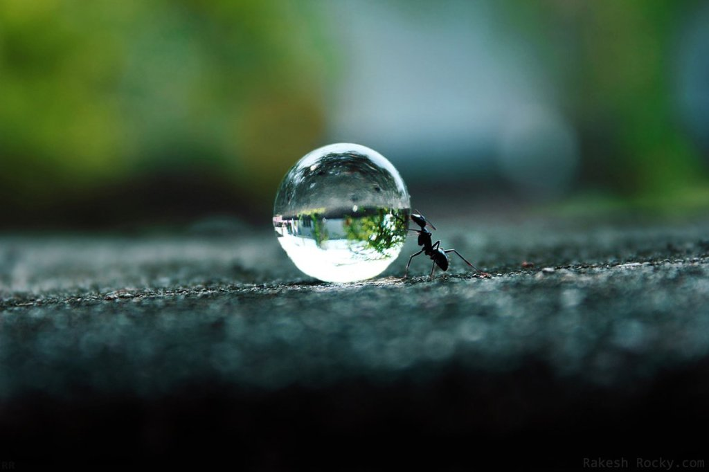 Ant and water drop. Image via