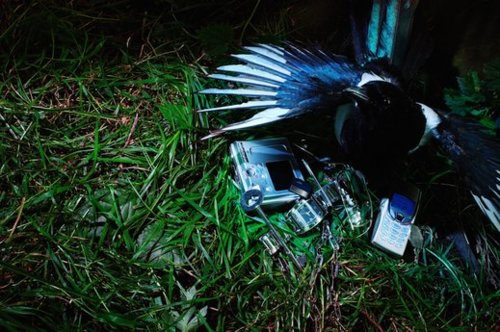 Magpie nesting in a bunch of shiny objects. Via source.