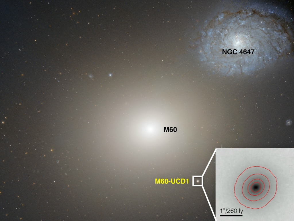 This Hubble Space telescope image shows the gargantuan galaxy M60 in the center, and the ultracompact dwarf galaxy M60-UCD1 below it and to the right, and also enlarged as an inset. Image Credit: NASA/Space Telescope Science Institute/European Space Agency.
