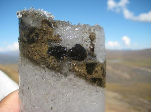 An ice core containing ancient caribou feces. It contains caribou DNA, digested plants, and ancient viruses. Credit: Brian Moorman