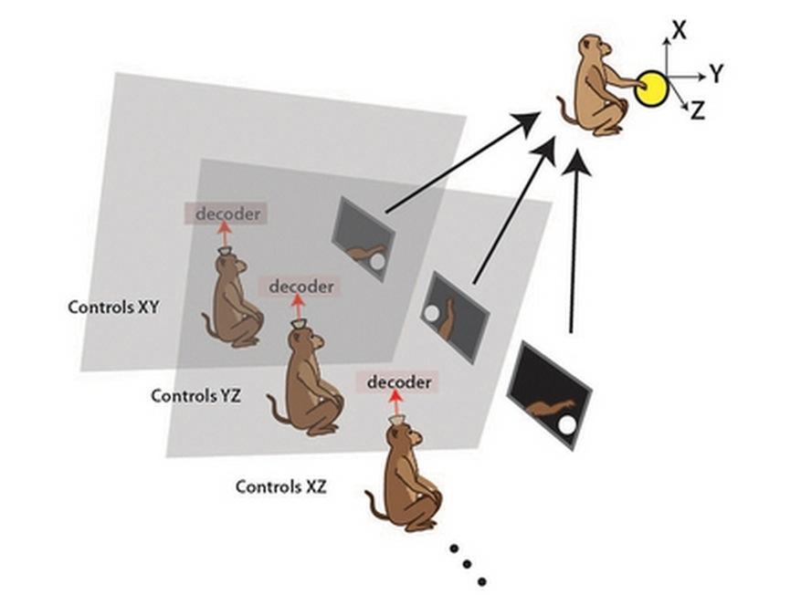 monkey-brain-interface