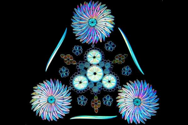 Diatoms. Credit: Klaus Kemp