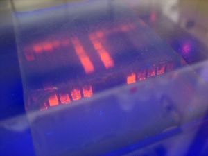 Gel electrophoresis in UV light/ Iwan Gabovitch