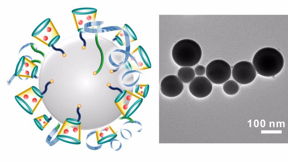 Left: Schematic illustration of liquid-metal 'nano-terminators.'Right: A representative TEM (Transmission electron microscopy) image of liquid-metal nano-terminators. Credit: Yue Lu