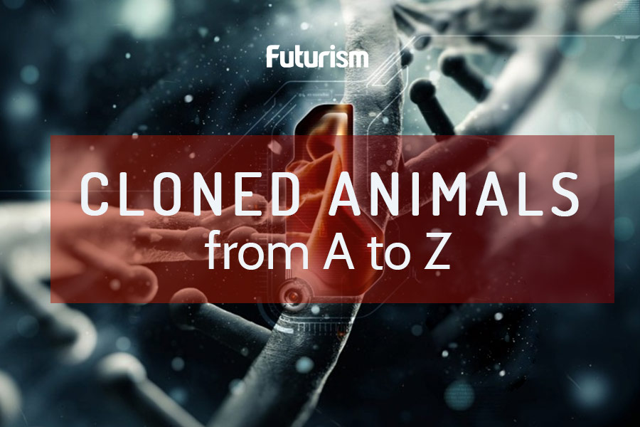 Seeing Double: The History of Animal Cloning