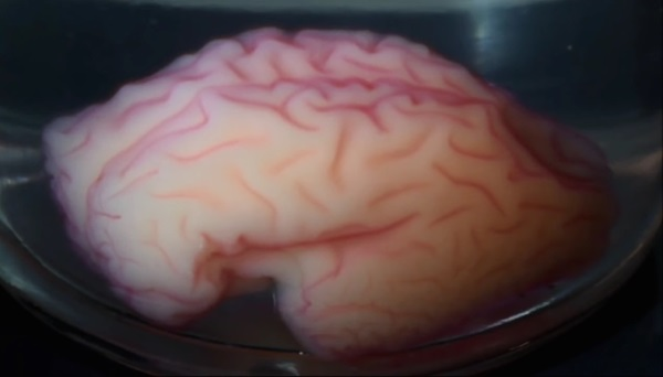 3d-printed-brain-model-reveals-physics-how-human-brain-folds