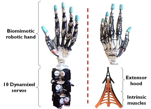 Image Credit: http://spectrum.ieee.org/automaton/robotics/medical-robots/biomimetic-anthropomorphic-robot-hand