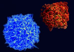 T Cell combination image