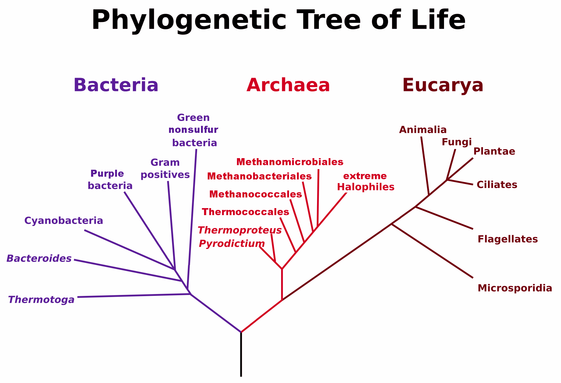 """There's a Revised """"Tree Of Life,"""" And It Has 1000+ New Species"""