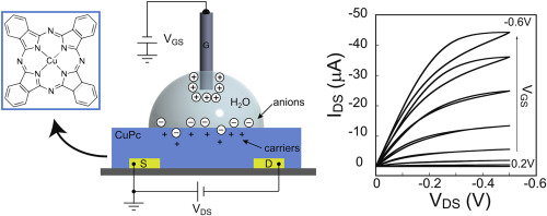 A schematic of the electronics of the biosensor. Credit: Organic Electronics
