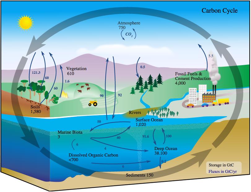 Carbon Cycle: Image Credit: NASA