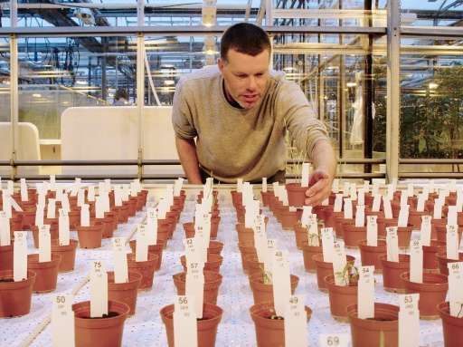 """Researcher Wieger Wamelink inspects crops from the """"Martian"""" soil."""