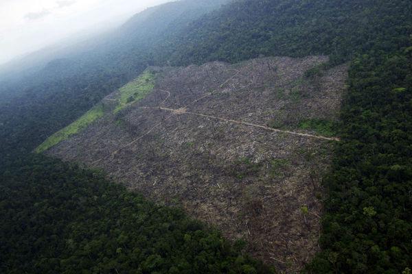 Stian Bergeland/Rainforest Foundation Norway/Reuters