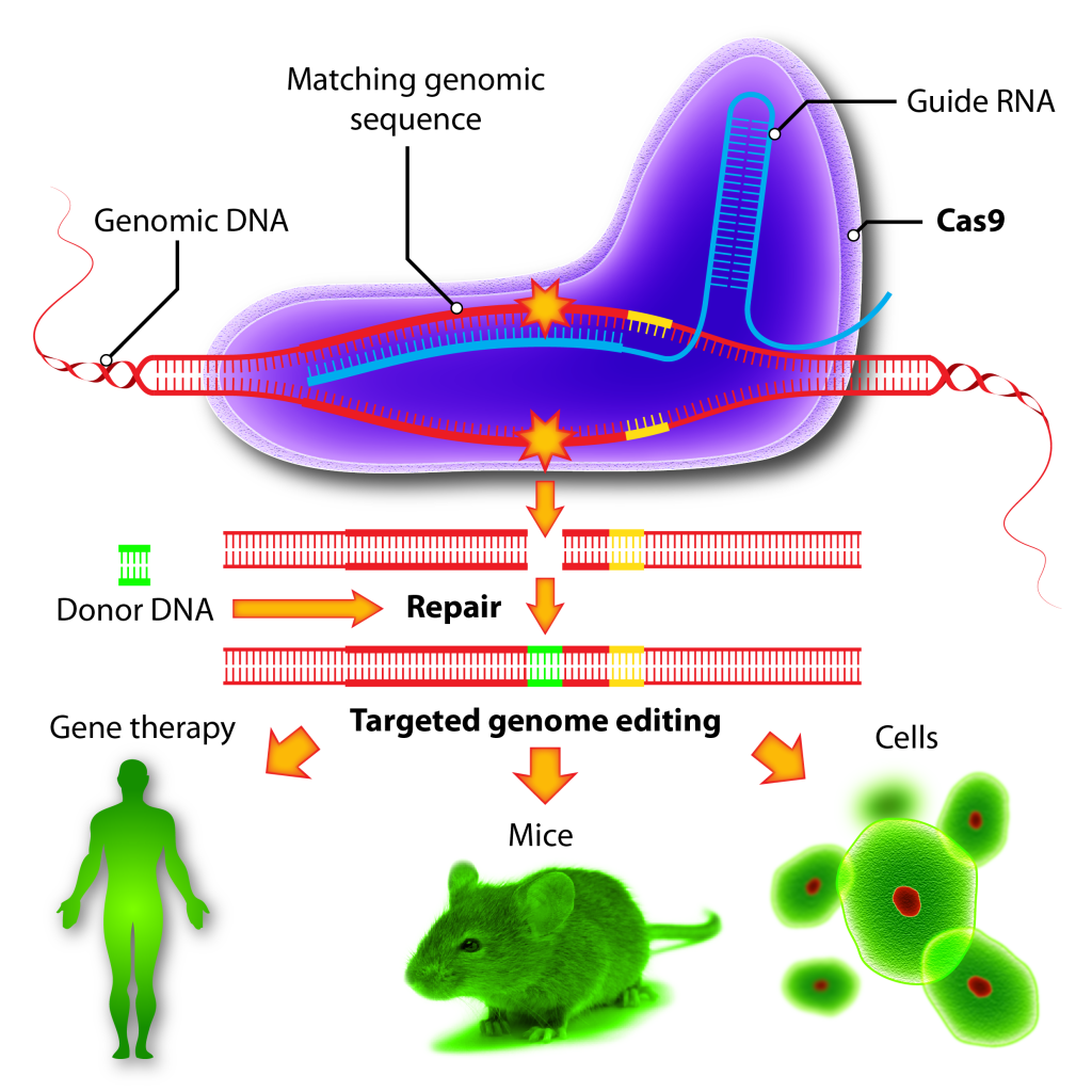 Gene-Editing-for-Therapy_Fig4