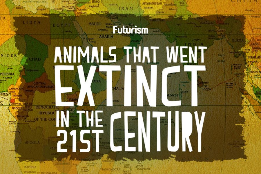 Animals That Went Extinct In The 21st Century [Infographic]