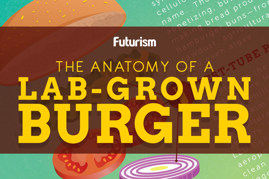 The Anatomy of a Lab-Grown Burger [INFOGRAPHIC]