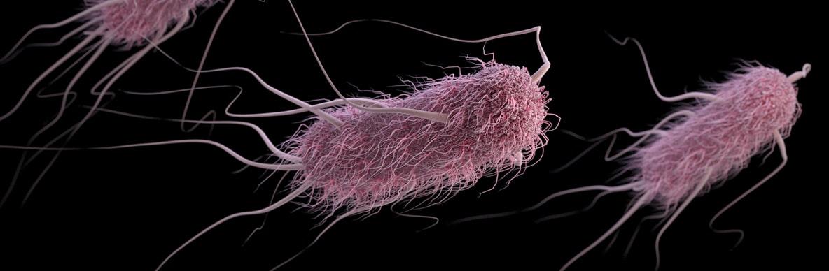 An Escherichia coli (E. coli) bacteria. Credit: CDC