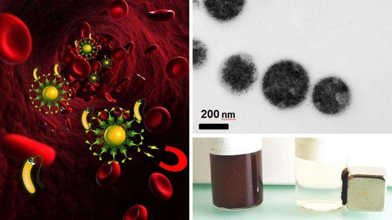 "Bacteria can be removed by magnetic blood purification (left). A suspension with magnetic iron particles (top right) can be ""cleaned"" using a magnet (bottom right). Credit: Laboratory for Materials Science and Technology"