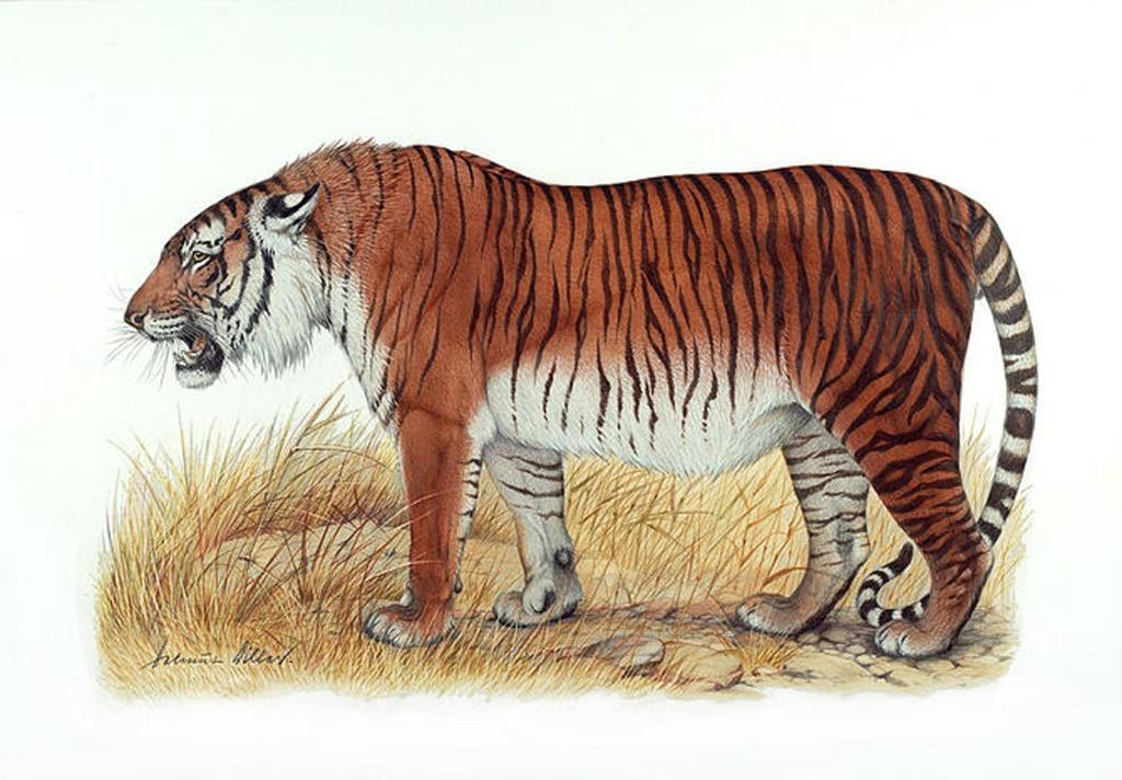 tiger siberian tiger caspian tiger wwf extinction