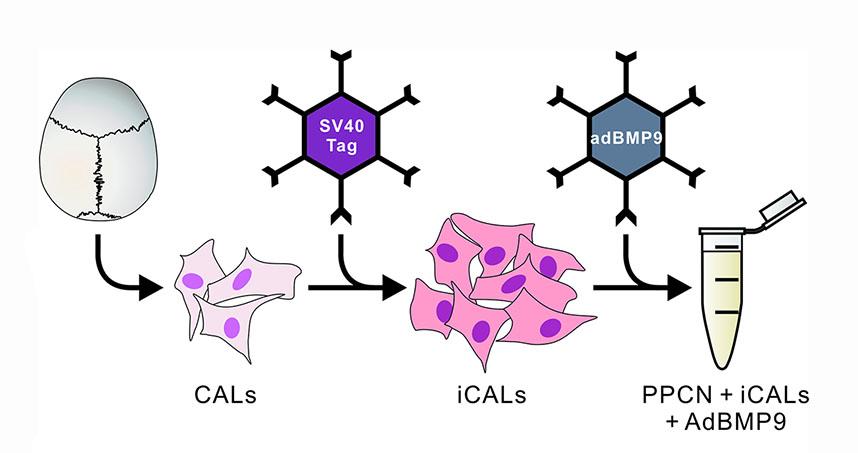 A schematic representation of the experimental design. Credit: Northwestern University