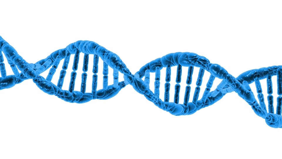*5* Researchers Release Successful Results of First Genetic Edit of Viable Embryos