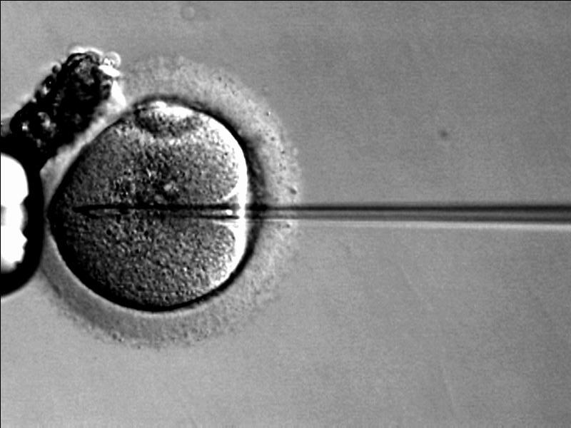 [NT] Three-Parent Babies Are The Next Big Thing In IVF