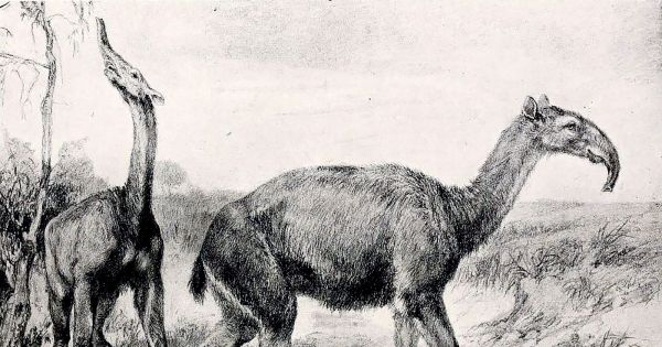 A Strange Creature Discovered by Darwin Has Baffled Researchers for Decades