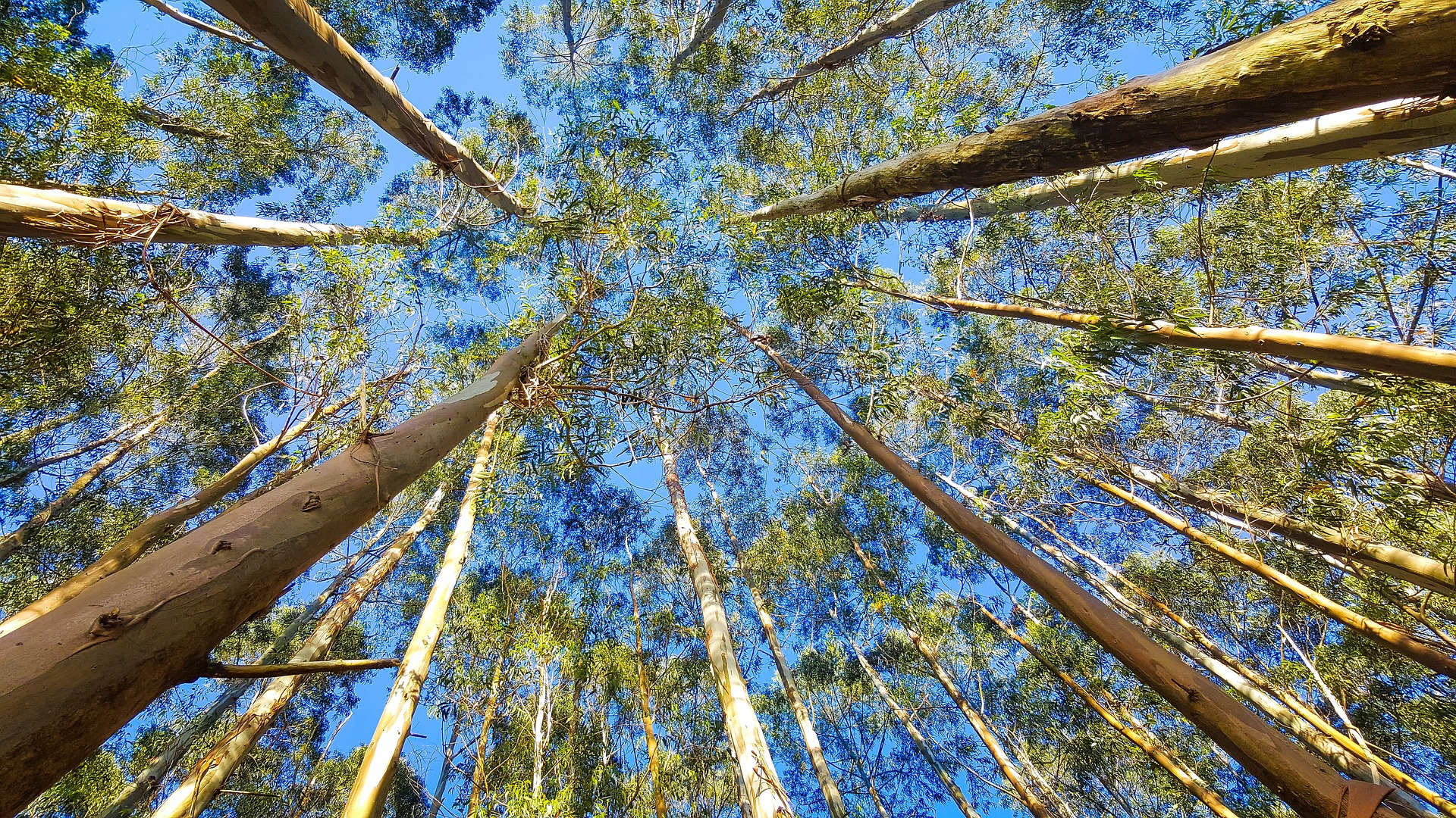 In extreme heat, trees stop sucking carbon from the air