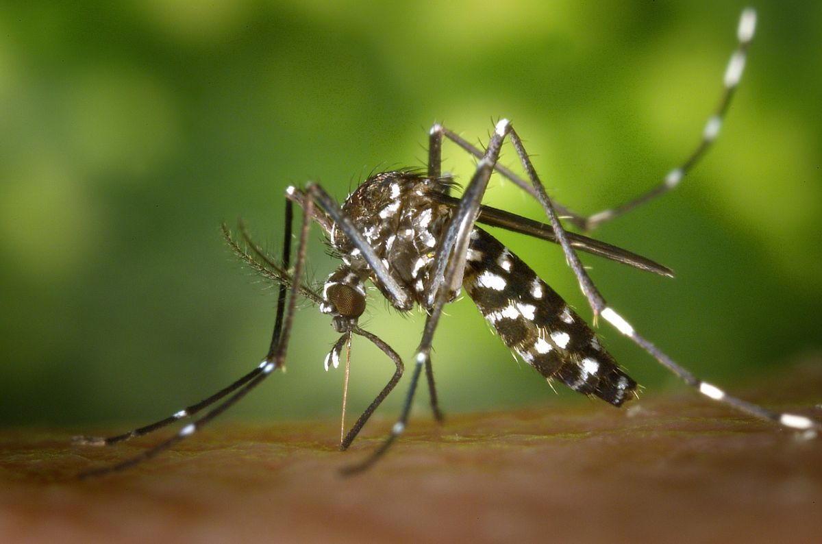 It turns out that mosquitoes can learn and remember. Image Credit: WikiImages / Pixabay
