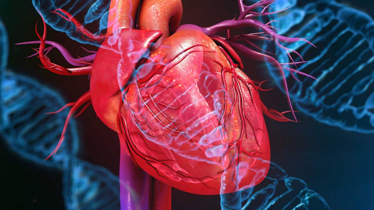 Susceptible to Heart Disease? Gene Editing Could Change That