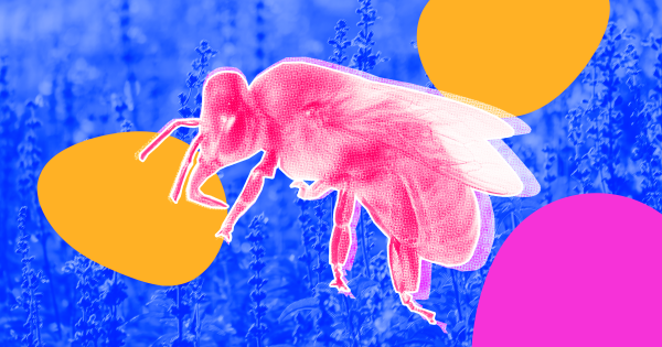 European Union Likely To Ban Common Insecticides to Save the Bees