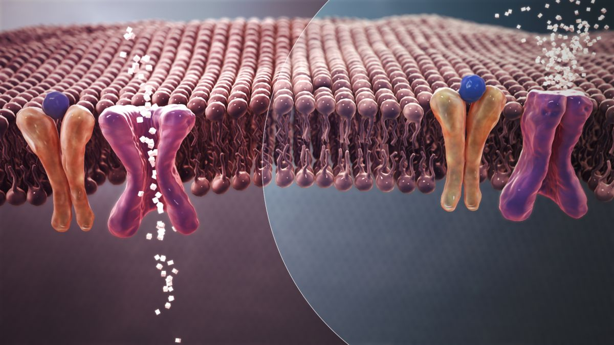 Viral insulin discovery suggests microbes could influence diabetes
