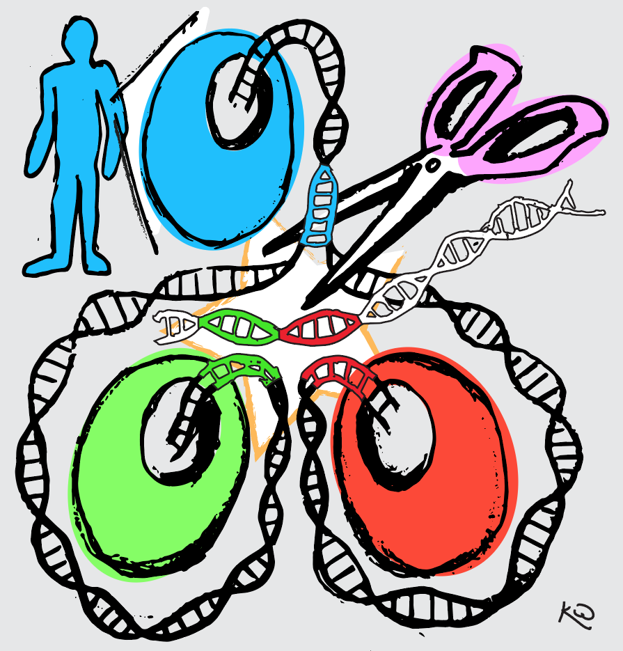 An illustration of the new gene editing technique, showing DNA being trimmed by scissors as it splits off into two twin cells.