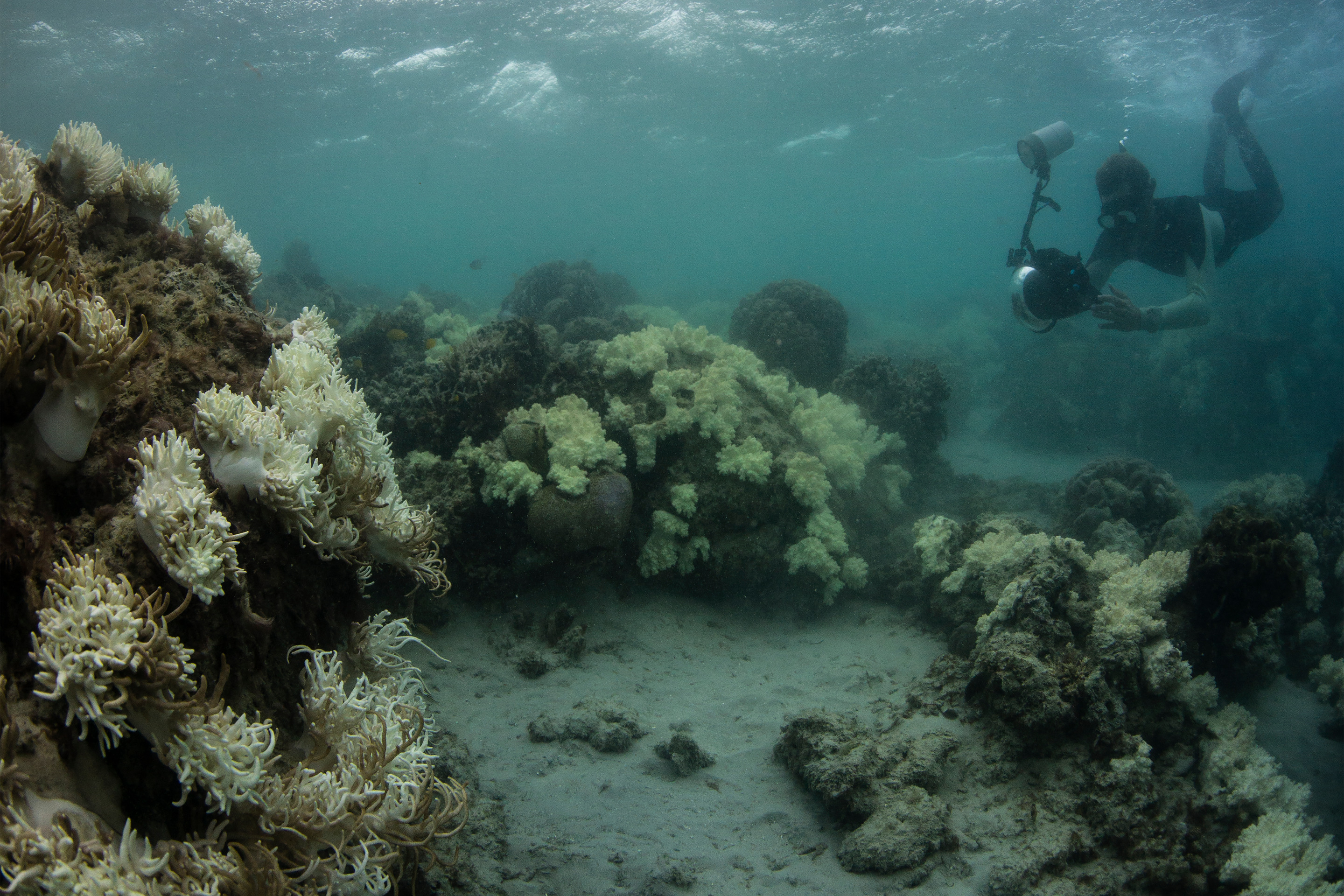 A snorkeler with a rounded panoramic camera documenting bleached and dying corals around Lizard Island, on the Great Barrier Reef, in May 2016/