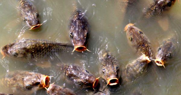 Os rios do mundo são todos apoiados, deixando peixes sem lugar para ir
