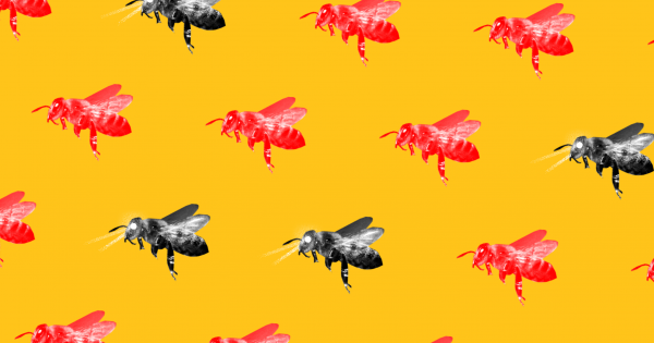Robo Bees Can Infiltrate And Influence Insect Societies To Stop Them