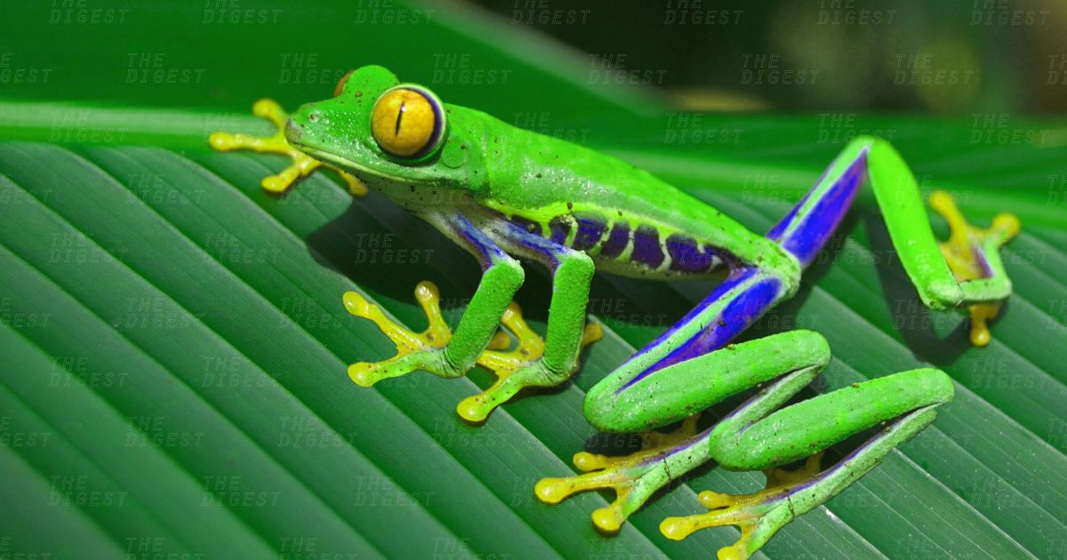 You Can Now Genetically Engineer Your Own Mutant Frogs For $499