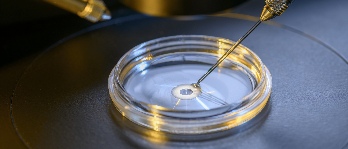 """Scientists just took a """"spectacular step"""" towards lab-grown human egg cells"""