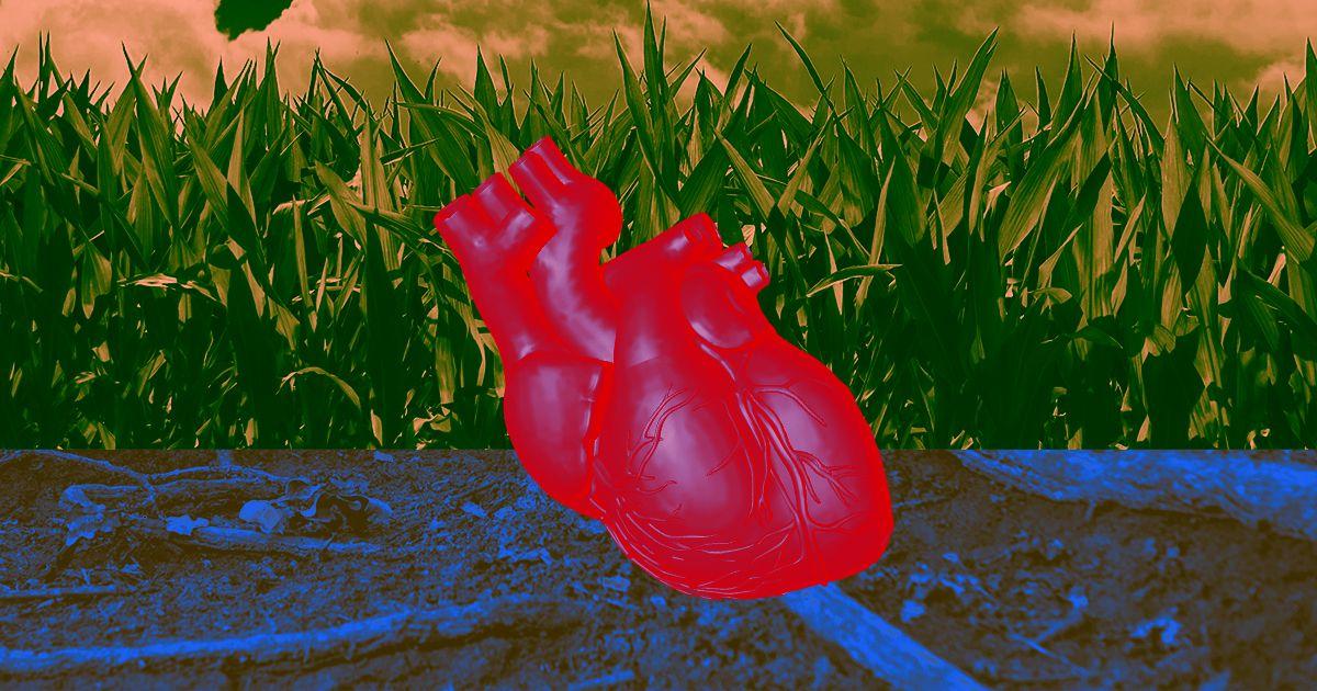 heart tissue engineered beats