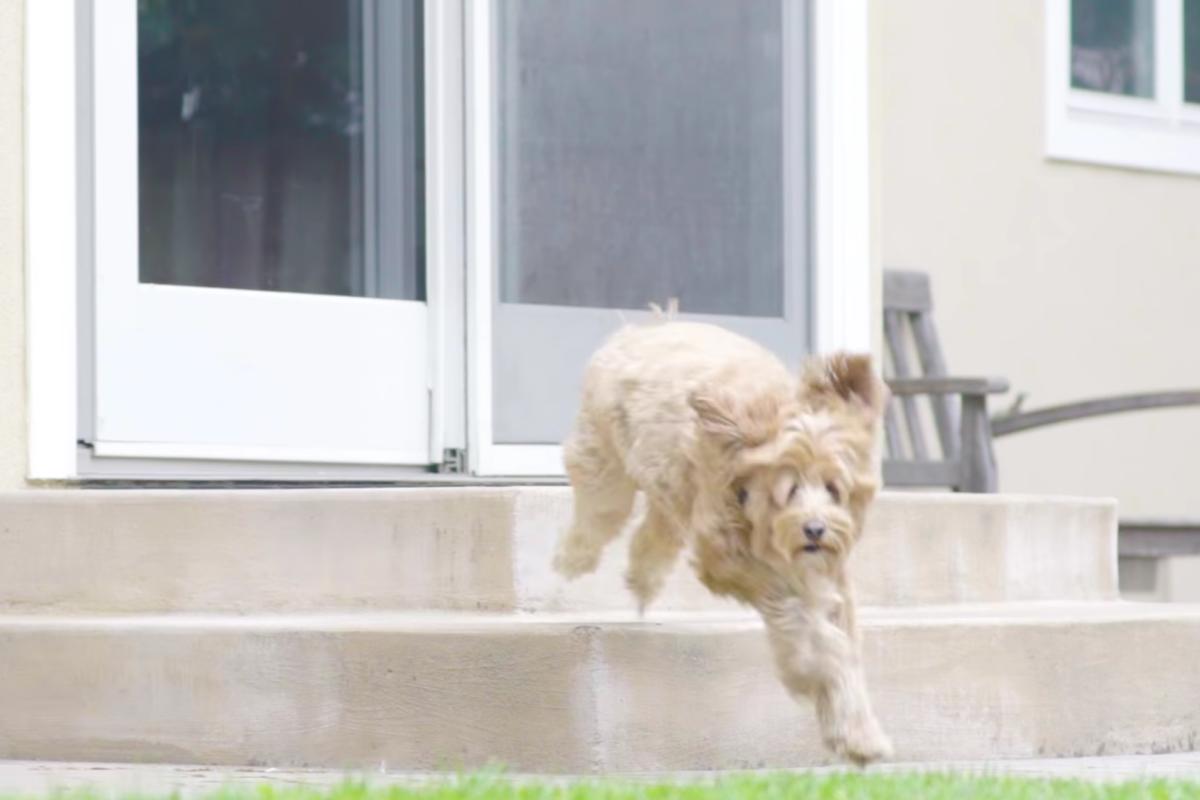 Wayzn Automatic Sliding Dog Door