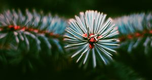 Pine needles on a green Christmas tree