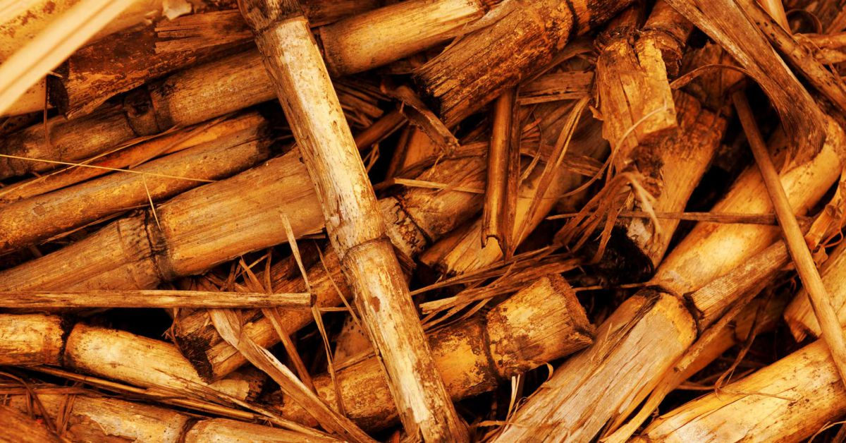 This Island Nation is Getting Power From Sugarcane Instead of Oil