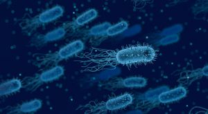 Electricity producing bacteria may one day play a big roll in producing the Earths energy